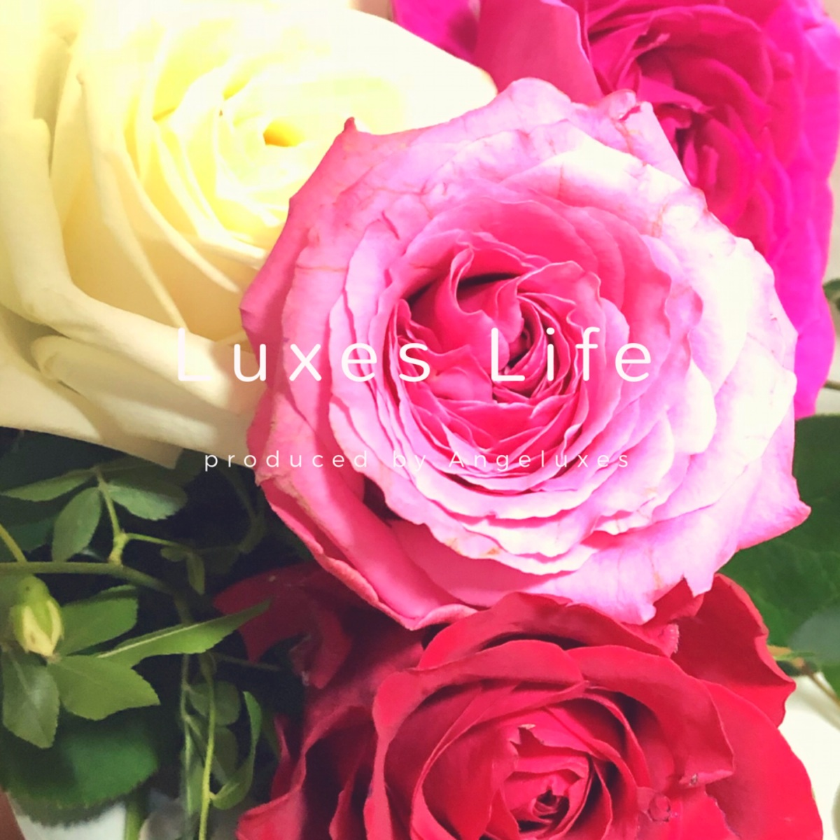 バラとアロエで春肌対策